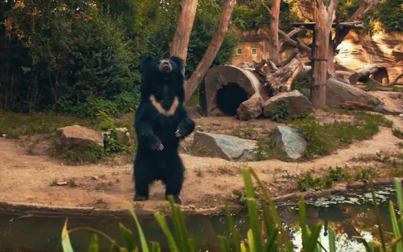 莱比锡动物园 Zoo Leipzig Lippenbär 懒熊