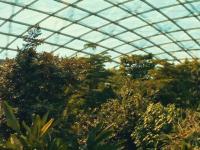 热带雨林馆 Gondwanaland